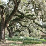 Brookgreen Gardens 3/2014