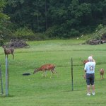 Feeding the deer - just beyond the fenced in yard.