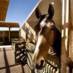 Horse stables at Explora Atacama