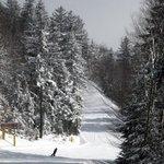 Heisler Way - a pretty green trail