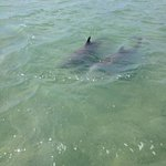 dolphins on our outing today
