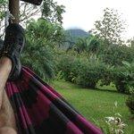 hammock view