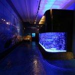 3500 Gallon Aquarium
