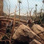 Lemurs in the Madagascar exhibit