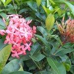 Cercos floridos