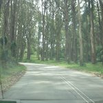 The tall timber lining the roads make it feel a world away from Melbourne