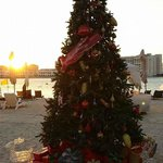 Christmas tree on the beach!