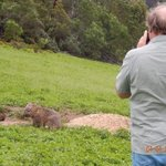 Ron taking a picture of a wombat.