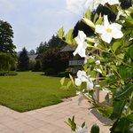 Grüne Parkanlage und blühende Blumen