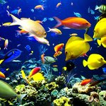 Tiran Island - some of fishes