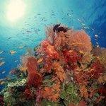 Tiran Island - reef stunning!!