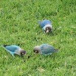 free range birds