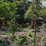 Cashew Plantation