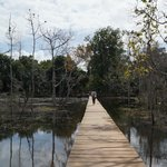 The walkway through the dying forest at the Jayatataka Baray