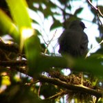 Bird through the Scope