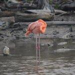 Flamingo en su habitat.