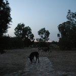 les animaux en liberté dans le parc