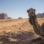 Another from the camel ride, these creatures are great!