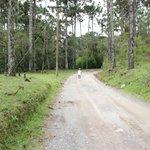 Estrada da Trilha