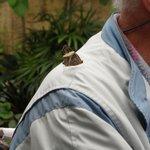 Vlinders strijken neer op je schouder en blijven daar een tijdje zitten .