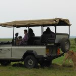 Lions Around a Saruni Vehicle