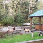 Elk @ back of property