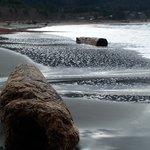 Port Renfrew beach