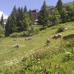 Alpe di Mera.pascoli.