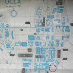 UCLA's map of the campus, with the garden circled in maroon