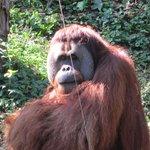 Love the Orangutans