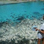 Fish feeding with marine biologist