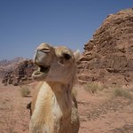 Hey! and welcome in Wadi Rum!!