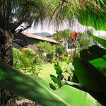 View from the banana trees (95306417)