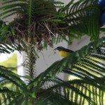 Birds in dining area :-)