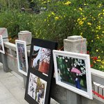 out doors gallery