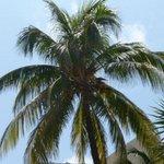 Palm at the beach