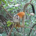 Monkeys right outside of your room!