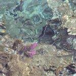 Klares, warmes Rotes Meer mit Korallen und Fischen