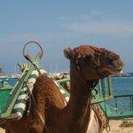 Camel Rides on beach
