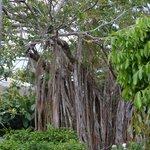 L'arbre de Coluche
