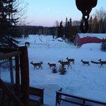 Family of deer right outside
