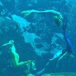 The Graceful Mermaids!