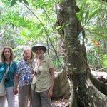 Sian Ka'an rainforest walk