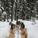 Dog sledding. This part was through the woods.