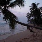 Having fun with Palm Tree-1