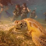 We saw several turtles during the dive. The Preserve is incredible! Literally like a scene from