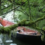 Canoe snuggle up to the shore at Meares Island