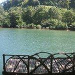 Mangrove Reso