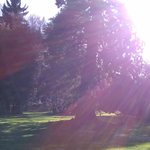 Sunshine and Trees :), that combination can't be beat!