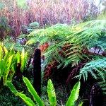 the gardens of Sangoma